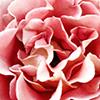 Flower_Thumbnail