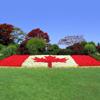grass Canada flag
