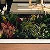 Upside Plant Trellis