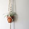 Hanging-plant-thumbnail