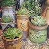 Planters-thumbnail