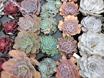 Succulents Your New Hobby