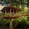 Treehouse-Thumbnail
