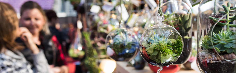 terrarium in a glass orb