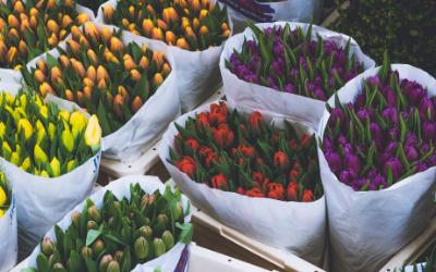 U-Pick Blooms