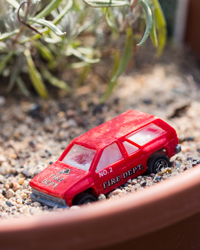 Toy Firetruck on a plant