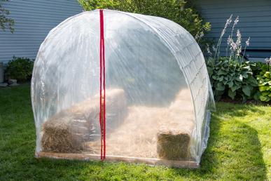 Six-Week Greenhouse