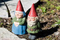 A couple of gnomes in the garden