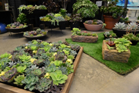 Feature Gardens at the show