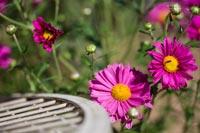 landscape-gardens-flowers-200