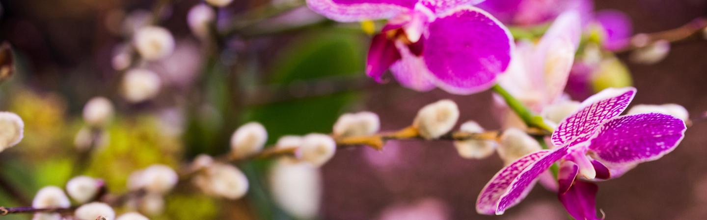 Sogetsu floral arrangment