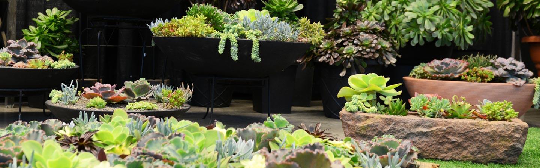 garden-display-50