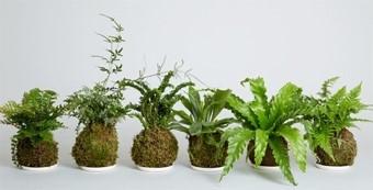 urabn botanist workshop 2