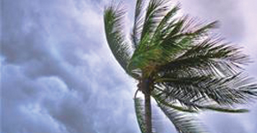 Palm Tree hit by storm