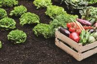 PHGS_CopyPointF_Edible Garden_resize