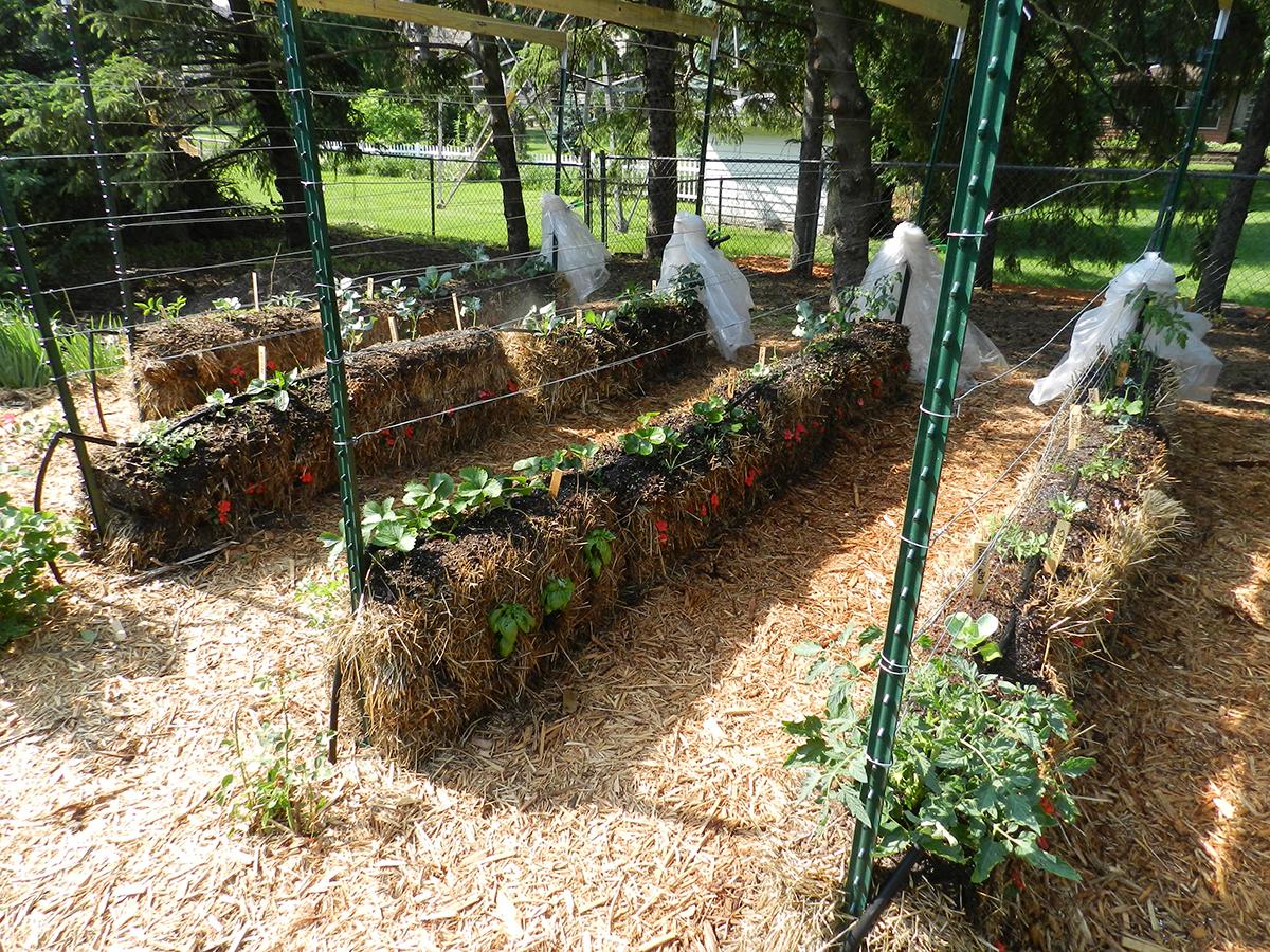 Straw Bale Gardening: A Revolutionary Way To Grow!