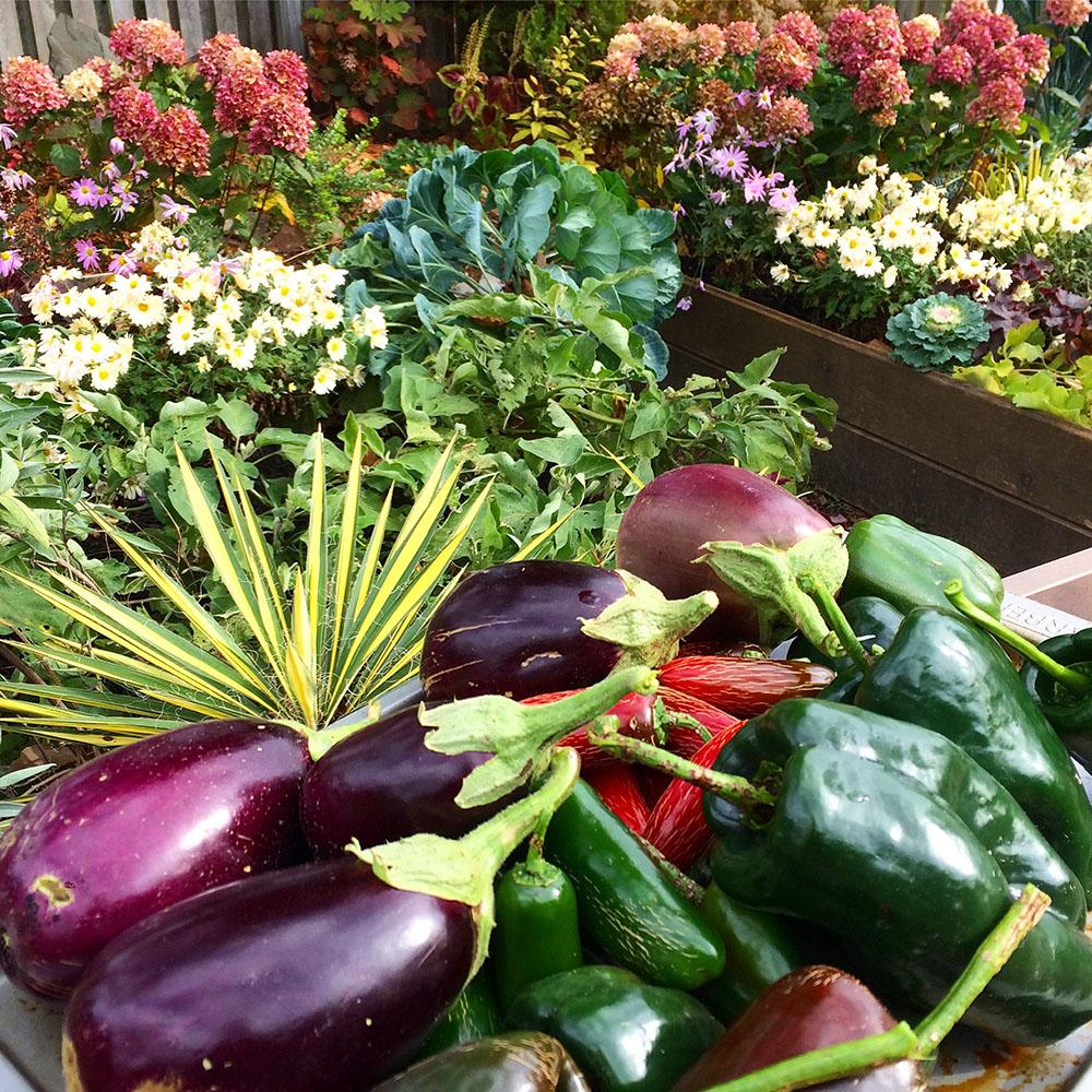 edible landscaping blog